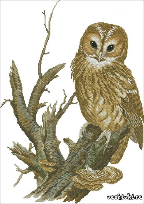 Схемы птицы и бабочки сова