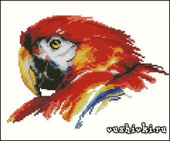 Профиль попугая