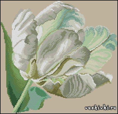 Белый тюльпан. Схема вышивки