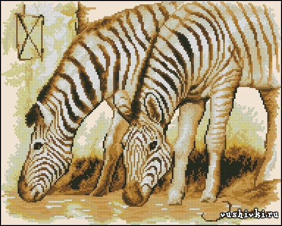 Зебры. Схема вышивки