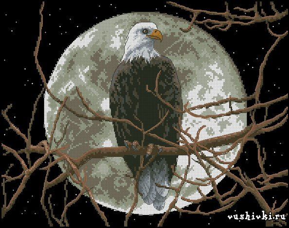 Eagle in Moonlight (Dimensions)